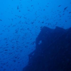 Gran banco de peces